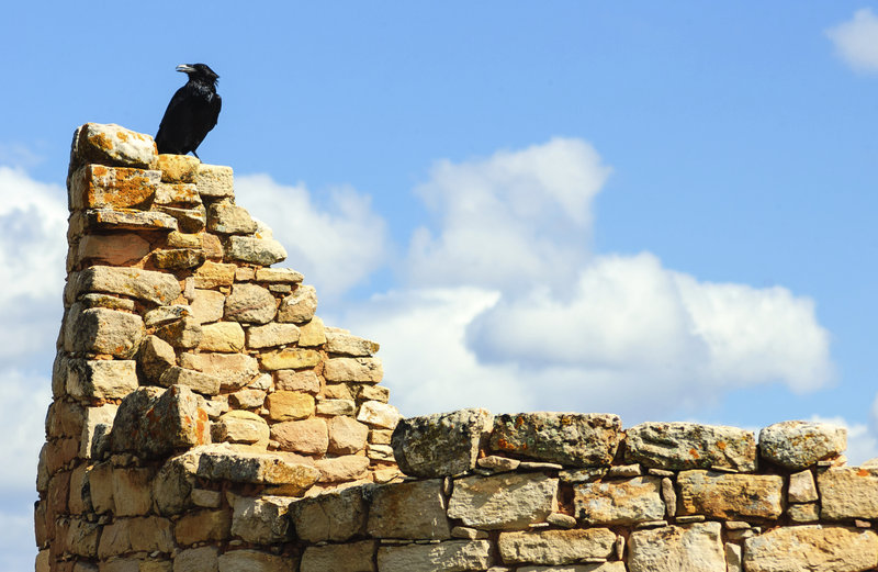 Hovenweep National Monument, bird, stone