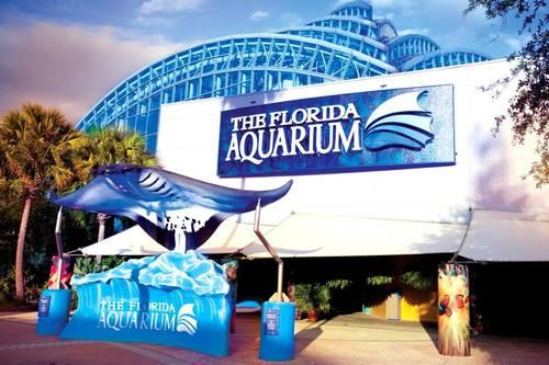 The Florida Aquarium Tampa Fl Aaa