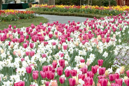 Dallas Arboretum And Botanical Garden Dallas Tx Aaa Com