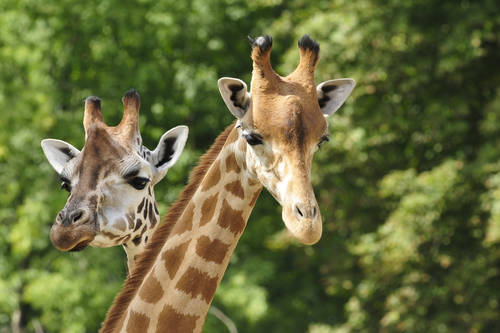 Six Flags Great Adventure Safari Jackson Nj Aaa Com