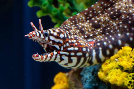 Tennessee Aquarium Hours >> Ripley's Aquarium of the Smokies - Gatlinburg TN | AAA.com