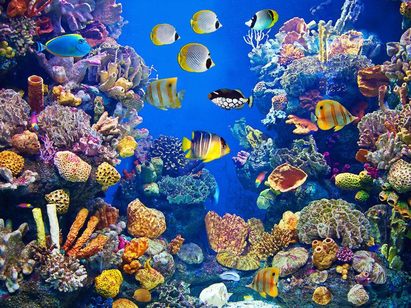 Florida Aquarium S Aaa Travel
